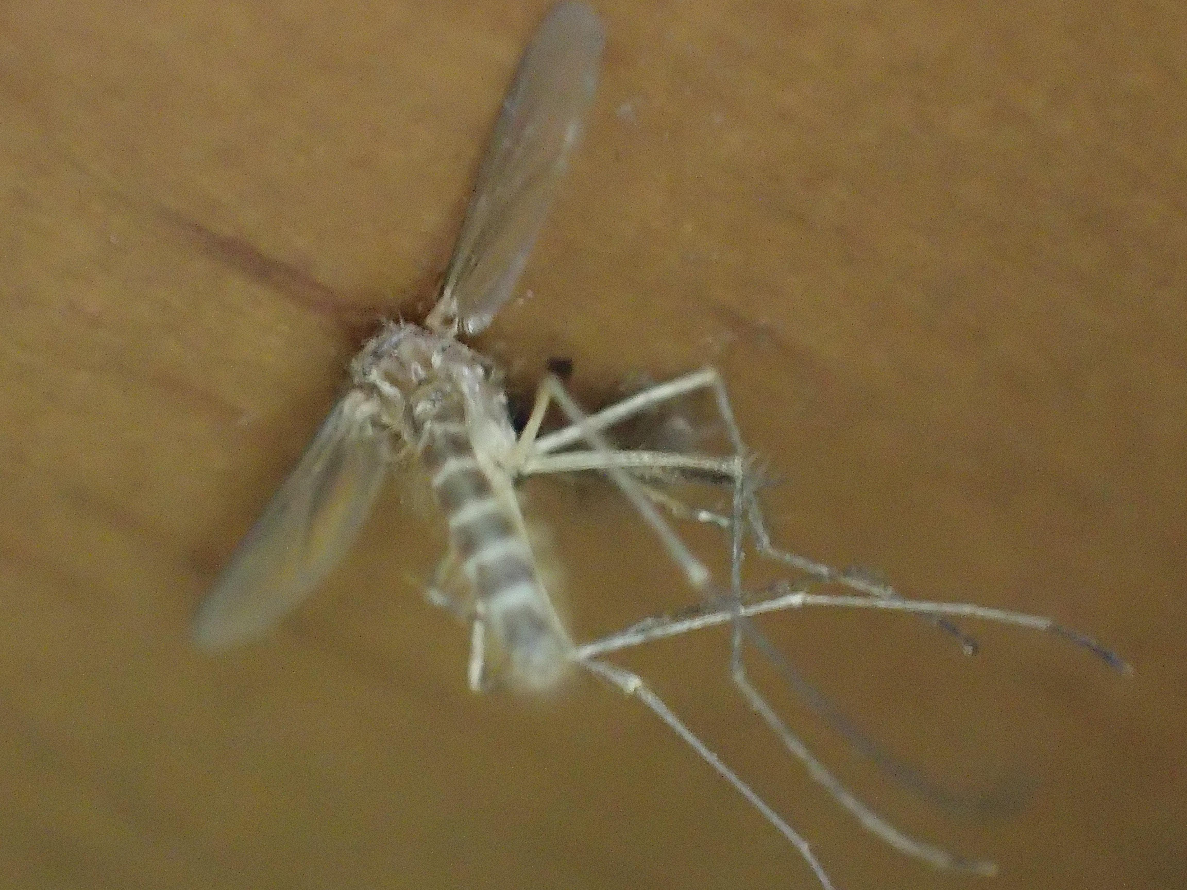 蚊がテーブル・机の脚に着地していた瞬間を逃さず駆除
