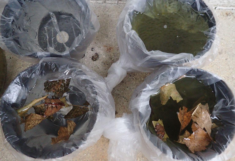 4種類の雨水環境を設置して蚊の産卵待ち