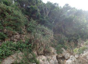 山で昆虫採集・虫採り