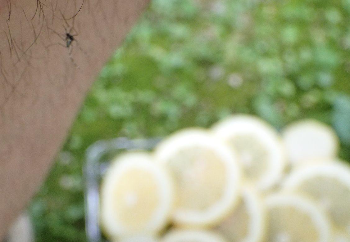 レモンを近くに置いても蚊は血を吸いに近付いてきた